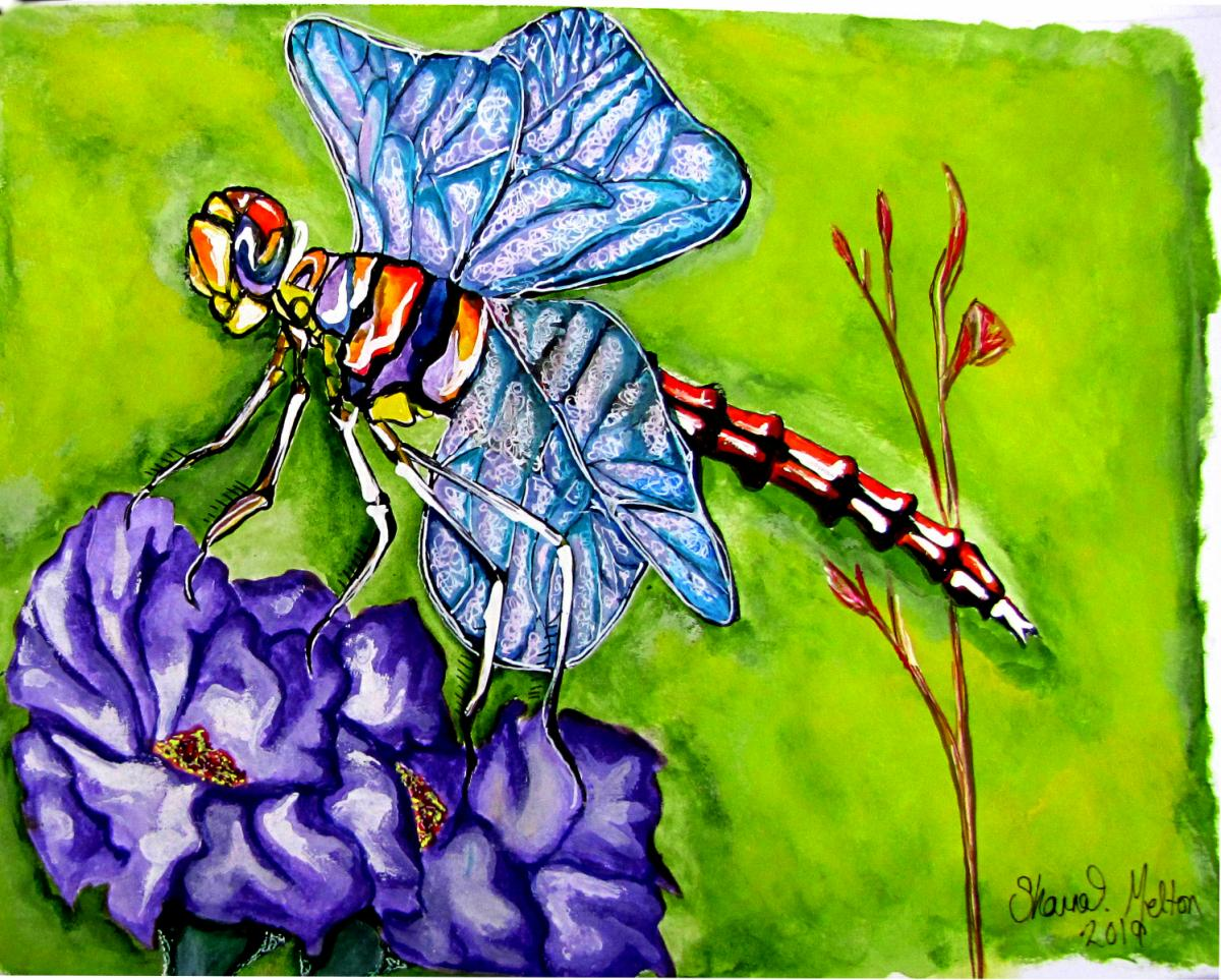 Purple Pause Dragonfly